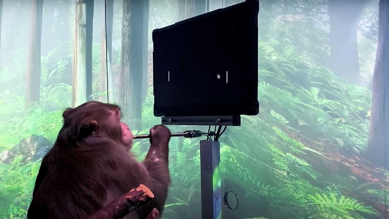 , Elon Musk's Neuralink shows a monkey brain controlling Pong – Source fastcompany.com, iBSC Technologies - learning management services, LMS, Wordpress, CMS, Moodle, IT, Email, Web Hosting, Cloud Server,Cloud Computing