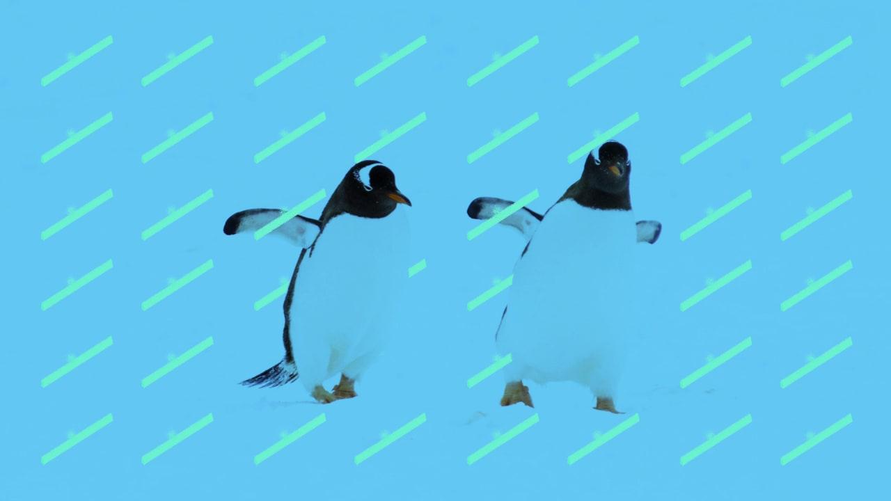 , Travel tool Flight Penguin brings back Hipmunk's spirit – Source fastcompany.com, iBSC Technologies - learning management services, LMS, Wordpress, CMS, Moodle, IT, Email, Web Hosting, Cloud Server,Cloud Computing